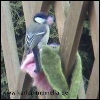 Filzvogel1