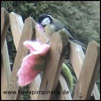 Filzvogel4