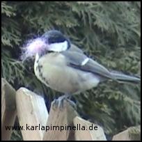 Filzvogel5